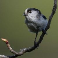 身近な可愛い小鳥