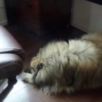 愛犬の体重