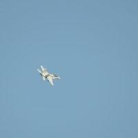 残り写真~米海兵隊岩国航空基地(2017年)5