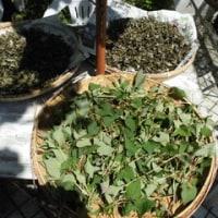 野草茶作りの生活