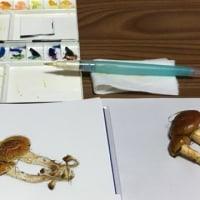 大人の水彩画教室の体験レッスン