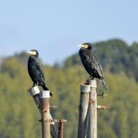 今日、出会った鳥たち