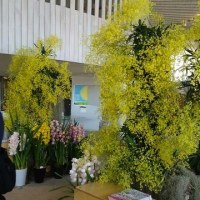 Western Orchid Exhibition in Showa Memorial Park in Tachikawa, Tokyo is being held.不慣れな英語で・・・
