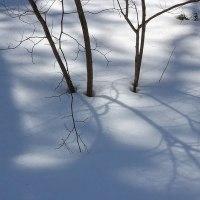 いつもの道雪の陰影