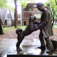 2017・5・27 雨の日のおばさんぽ 東京大学総合研究博物館ーUMUTオープンラボは面白い(^^♪