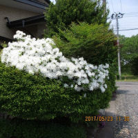 5月24日(水)・総会監査