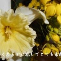 冬から春へと移り変わる季節は、さまざまな花が咲き私たちは喜んでいます