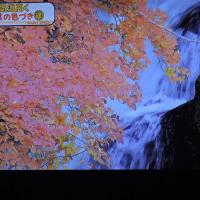10/26 23日に見たお天気の紅葉 こんなアングルはどう?