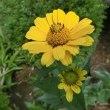 ポーチュラカ と この花の名は・・?