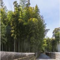 京都・森林公園の小径通り
