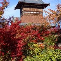 天朝山公園の紅葉 2016-3