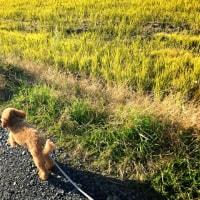 12/7(水)明るい秋のお散歩道