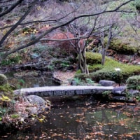 池田山公園とねむの木の庭