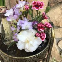 娘の生け花 寄植え