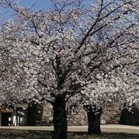 あさまふるさと村  あさま36の春