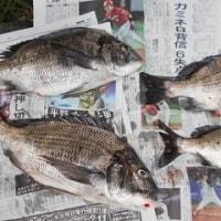静岡県 清水港。。。(お天気良い日に釣り予約)
