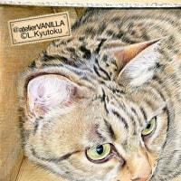 ダンボール箱に入って遊ぶ猫