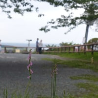 昨日の城山公園