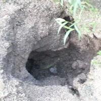 畑に大穴ができたあー