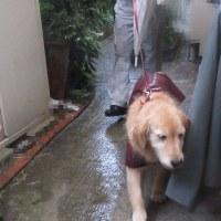 夕方散歩は大雨 170620