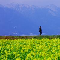 菜の花の楽園 守山市