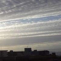 秋の空、うろこ雲?イワシ雲?。