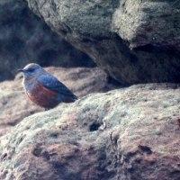12/11探鳥記録写真(狩尾岬の鳥たち:ダイゼン、シロチドリ、ハマシギ、セグロカモメ他)
