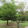 赤い葉っぱ、 県立三木山森林公園