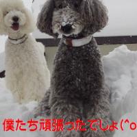 スタンプ&ラナの雪山登頂チャレンジ♪