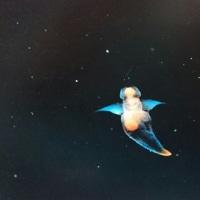深海魚その3