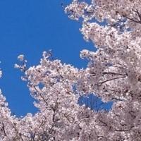 ◆ 春本番