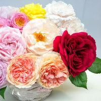 揺れる薔薇