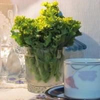イヴニング・カフェ・菜の花いいね!