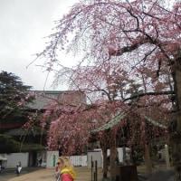 雨の増上寺
