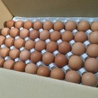 ふるさと納税、地養卵10kg卵167個来た