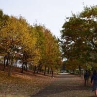四季折々755  小山内裏公園の錦秋2