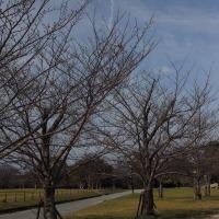 植物観察会 集合前の散策 その日の空