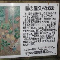 世界遺産、屋久島を旅して