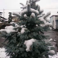 初雪&口臭予防