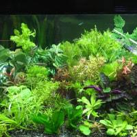熱帯魚、水草