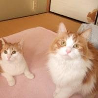 【猫と帰国final】中国 → 日本 への飛行機に乗る