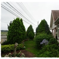 雨が上がって<今朝の庭6/30>