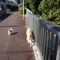 三連休の散歩