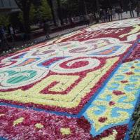 昨日の景色    札幌まちなか探検隊    花満開の初夏の街 フラワーカーペットにて(スタッフ撮影)