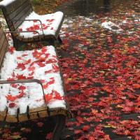 初雪*.❄