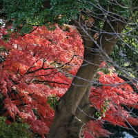 横浜晩秋の風景