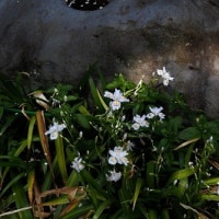 都立武蔵国分寺公園の春 5