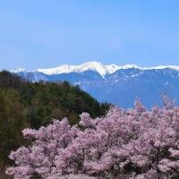 桜・桜・桜…