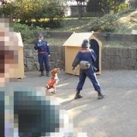 続・ぺット防災のブース(大新宿区まつり ふれあいフェスタ2016)~午後の部
