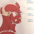 【ヘッドスパ×頭の仕組み】頭の筋肉のつくりについて